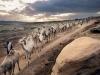 axum-132-camel-caravan-near-gobodura-quarry