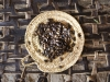axum-167-coffee-beans
