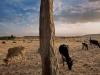 axum-25-gudit-stelae-field