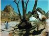 beyond-bagamo_11-donkey