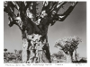 blackandwhiteshots_kokerboom_quirer-tree_forest_keetmanshoop_district_namibia