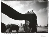 blackandwhiteshots_zoo_elephants_durban_sa
