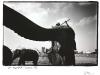 blackandwhiteshots_zoo_elephants_durban_sa