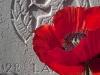 14-war-grave-in-belgium