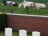 32-lone-tree-cemetery-heuvelland