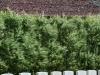 34-lone-tree-cemetery-heuvelland-flanders