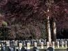 95-belgium-military-cemetery-hauthulst