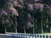 97-belgium-military-cemetery-hauthulst