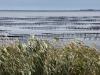 152-oyster-beds-inland-lake-of-thau-near-sete-france
