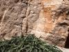 endemic-euphorbia-plant-socotra-1