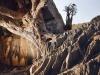 tamarind-tree-on-mountain-pass-to-homhill