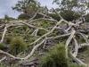 Kangaroo Island. Australia.