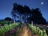 lomarins-wine-estate-with-full-moon-franschhoek-valley-south-africa-2011_0