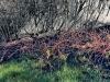 new-grass-after-fire-destruction-slopes-of-simonberg-mountain-stellenbosch-district-2008_0