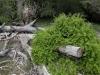 old-farmyard-with-dead-eucalyptus-trees-baviaanskloof-sa-2008