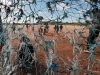 rolvark-rolling-pig-farm-labourers-soccer-field-mooketsi-area-south-africa-2010_0