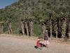 tall-aloe-vera-plants-line-a-gravel-road-near-kruisrivier-klein-karoo-south-africa-2007_0