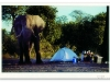 longagoway_elephant-at-tent