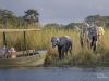 Guests of the Mvuu Wilderness Lodge on a river safari river cruise watch elephants graze on the banks of the Shire River.