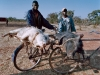 pigs-being-transported-to-market-on-the-road-to-chipata-southern-zambia-2003