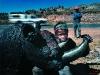 Zakele with black Rhino. Near Piggs Peak. Swaziland. '99.