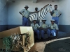 Fuel attendants with Zebra. Polokwane. South Africa. 1990.