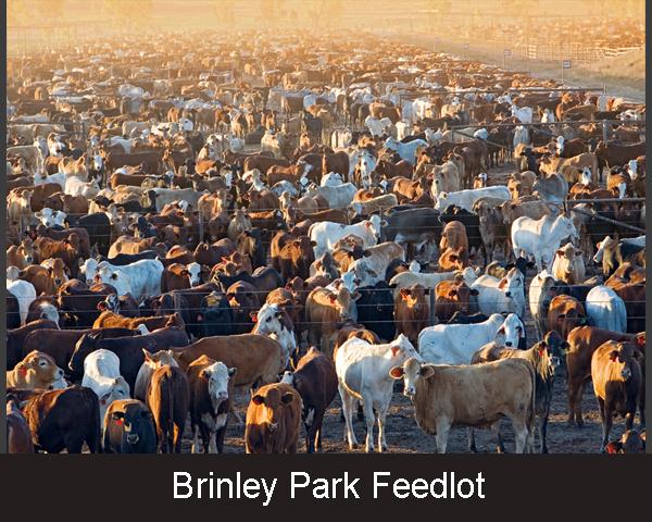 1. Brinley Park Feedlot
