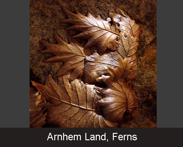 3. Arnhem Land. Ferns