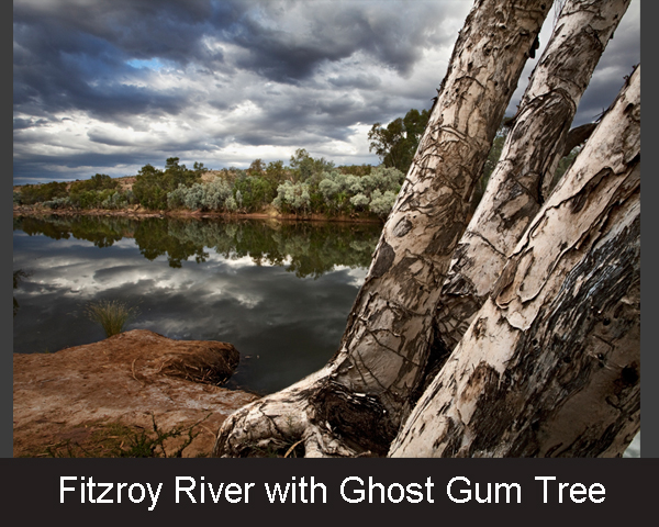 3. Fitzroy River with Ghost Gum Tree
