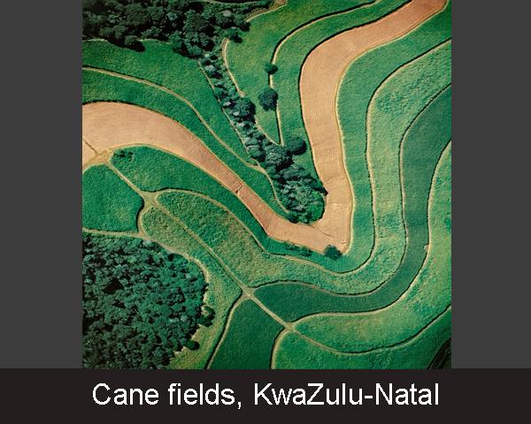 4. Cane fields. KwaZulu-Natal