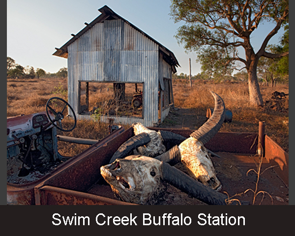 4. Swim Creek Buffalo Station