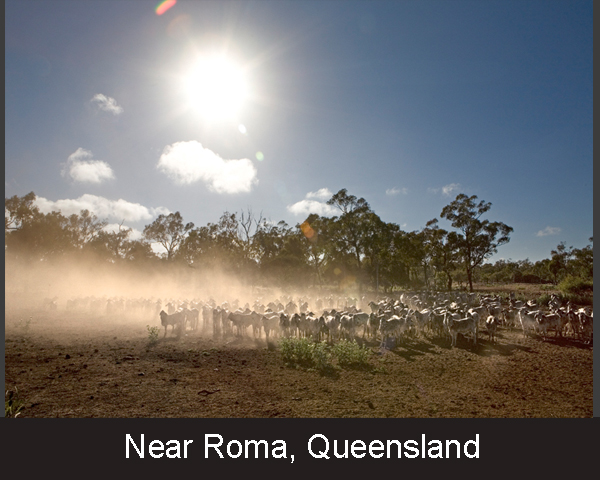 5. Near Roma. Queensland