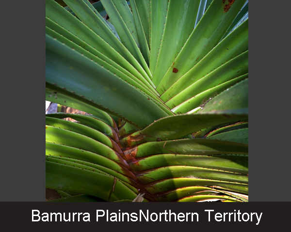 7. Bamurra PlainsNorthern Territory
