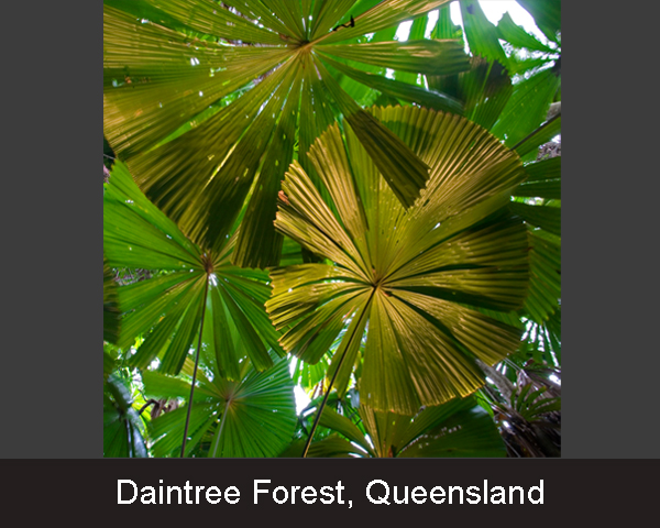 7.Daintree Forest. Queensland