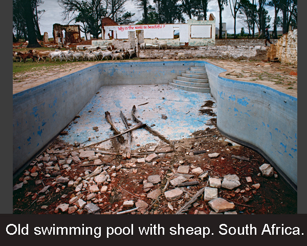 Old swimming pool with sheap. South Africa.