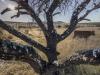 African Farm. Norwood.