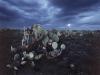 y5852 Moon over landscape with cactus plants near Karoo town of Sutherland. Northern Province. South Africa.  - Mond ueber Kakteen. Noerdliche Provinz. Suedafrika.   - 50 MB. Copyright: Obie Oberholzer / Bilderberg