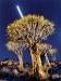 moonrise-behind-quiver-trees-near-keetmanshoop-namibia
