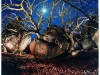 beyond-bagamo_8-treeboulder