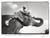 blackandwhiteshots_circus_elephant__cleaner_durban_kwazulu-natal_sa
