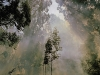 diesel-dust-abstracts_fire-in-eucalyptus-trees-bergville-south-africa-copy