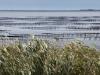152-oyster-beds-inland-lake-of-thau-near-sete-france