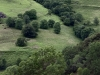 99-landscape-on-pass-up-to-col-de-legal-from-touremire-france-red-limousin-cattle