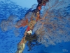 Great Barrier Reef. Australia.