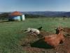y9724 - Africa, South Africa, Eastern Cape. Rural landscape with cattle. - Afrika, Suedafrika, Eastern Cape. L‰ndliche Region mit Tieren. - 38 MB. Copyright: Obie Oberholzer / Bilderberg