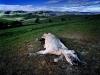 dead-horse-on-moordenaarsnek-pass-between-mount-fletcher-and-maclear-south-africa-2006_0