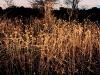 dry-shrub-near-groot-marico-south-africa-2000