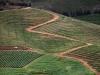 elandskloof-wine-estate-high-noon-valley-cape-area-south-africa-2011