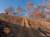 farm-track-tokara-wine-estate-hellshoogte-pass-stellenbosch-south-africa-2008_0