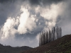 fire-damaged-pine-trees-stettybberg-mountain-near-villiersdorp-cape-sa-2011_0